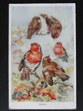 Birds ROBINS after Artist M.Bowley c1950's Postcard by Valentine