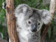 Simulation Koala Bear Plush Toy Soft Doll Animal Stuffed Reward Pillow Gift 17cm