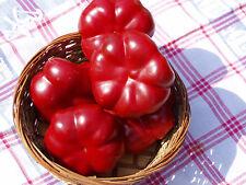 Tomatenpaprika - Paradicsompaprika - 10+ Samen - HONIGSÜß und KNACKIG!