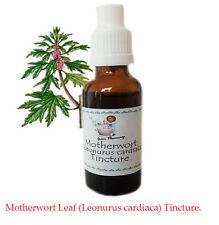Motherwort Leaf (Leonurus cardiaca) Tincture. All Natural.