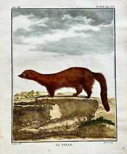 1766 De Seve - FISHER CAT - large QUARTO edition hand colored engraving
