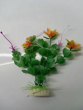plante multicouleur