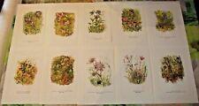 10 Ancienne Affiches Botanique Vesce Herbe Muflier des Moissons,Sariette, Ortie