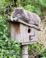 Cat Motivational Poster Art Print Kitten House Toys Pet Supplies Collar  MVP456