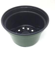 Mum Pan, Leightweight Mum Pan, (Qty. 25), Green Nursery Greenhouse Pot, 8x5 Inch