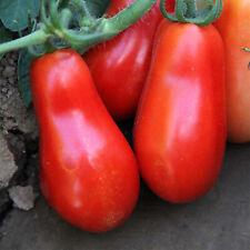 Organic San Marzano Tomato Tall Vines ~25 Seeds - Heirloom, Non-Gmo, Vegetable