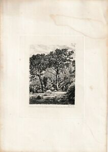Etching 'The Path Through the Forest' by A.J. LEWIS.Day & Son. 1861