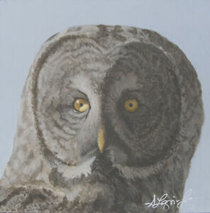 Shawna Lampi-Legaree Great Grey Owl ORIGINAL PAINTING 8x8 Acrylic Bird Wildlife