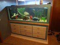 Build This Beautiful 8' Long 325 Gallon Custom Aquarium For $300