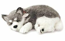 Realistic Breathing Alaskan Husky - Perfect Petzzz Life Like Husky Dog