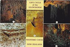 New Zealand 1989 - 1993 Posted 4 Picture Post Cards - Glowworm - Waitomo Caves