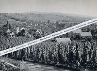 Hügelheim im Markgräflerland - Müllheim - um 1955    K 10-12