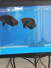 20 Gallon Aueon Fish Tank with fish ex+