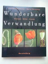 Wunderbare Verwandlung Knospe Blüte Frucht 1999