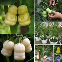 10pcs Rare Delicious ginseng fruit Graines Légumes Plant Seed Nouveau