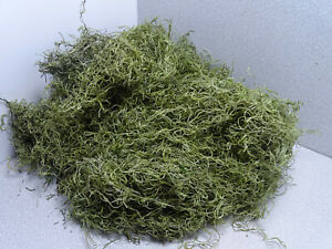 5,40€/100g Dschungelmoos grün Deko Moos Floristik Basteln Packung 50g