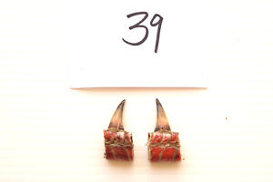 "1-1/8"" SINGLE SPURS, EASTERN WILD TURKEY LOT OF TWO lot #39"