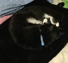 New listing Cat bed Black Color Small Size Easy Clean