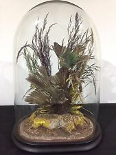 Antique Victorian Taxidermy Exotic Birds In Original Glass Dome And Base