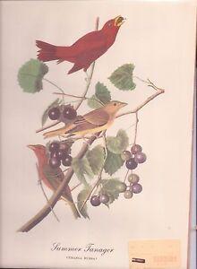 """Tanager Bird Print - Audubon Repro 1940's 11.75"""" x 9""""  (bird2)"""