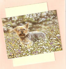 Yorkie Yorkshire Terrier Notecards Note Card by Uk Artist Paul Doyle Pack of 5 b