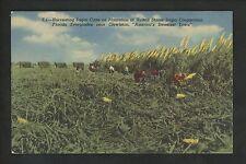 Industry Cane Sugar postcard Clewiston, Florida US Sugar Corporation linen