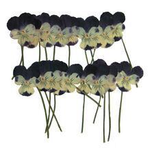pressed flowers pansy for art craft, card making. 20pcs