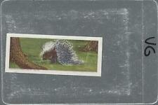 1964 African Wild Animals #24 Crested Porcupine - VG