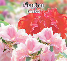 New listing Balsam Fresh Seeds Impatiens Balsamina Rose Balsam Touch Me Not Plant Huge Bush