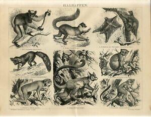 1882 LEMURS MONKEYS Antique Engraving Print