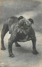 More details for vintage postcard, bull dog photo by thos fall a731 ec2