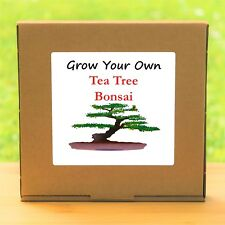 Grow Your Own Tea Tree Bonsai Kit - Indoor Windowsill Gardening Gift Set