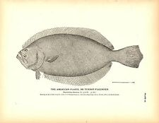 Rare 1884 Antique Fish Print The Flatfish Flounder Collection ~ Lot of 17 prints