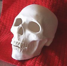 Ceramic Bisque Skull Realistic Cut Out  Ready to Paint