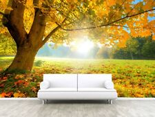 Tree Leaves Plants Sunny Autumn Photo Wallpaper Mural Home Poster Decoration l