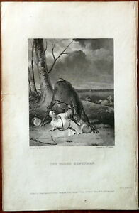 The Gored Huntsman by R. Cooper, McQueen, Thomas Hurst & Co. Vintage Small Print