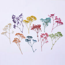 Natural Dried Flowers Baby's Breath Craft DIY Jewelry Making Mixd 1Pack 10098049