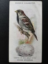 No.38 HOUSE SPARROW  - British Birds & Their Eggs by Ogdens Ltd 1939