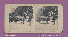 PHOTO VUE STÉRÉO : TARBES, VOYAGE DU PRÉSIDENT, PRÉSENTATION ÉTALON, CHEVAL-P257