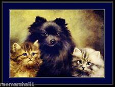 English Print Black Pomeranian Dog Dogs Cat Cats Puppy Kitten Art Vintage Poster