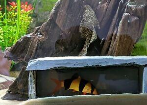 Natural SLATE Cave Hide AQUARIUM Pleco Breeding Spawning Eggs Fish Tank Watch 👀