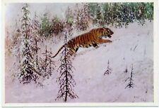 1975 Komarov Ussuri Siberian Tiger Russian Unposted postcard