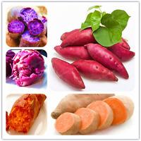 20 Pcs Seeds Sweet Potato Plants Vegetables Bonsai Vegetable Garden Supplies NEW