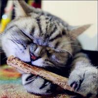 5PCS Pure Natural Catnip Pet Cat Cleaning Teeth Molar Silvervine Actinidia Stick