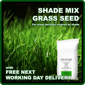 GRASS SEED SHADE AREA UNDER TRAMPOLINES TREES BUSHES  LAWN SHADY 1 to 100 Kg