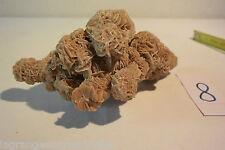 C8 Magnifique coquillage Rose des Sables  A voir collection
