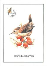 FDC 2449 - Oiseau Buzin sur gravure format A4 !