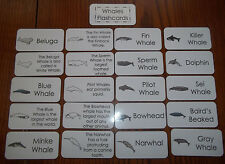 Whales Flash Cards. Preschool Picture and Word flash cards.  Reading, Vocabulary