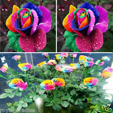 15 Seeds Beautiful Colorful Rainbow Rose Flower Seeds Yard Garden Plant Decor
