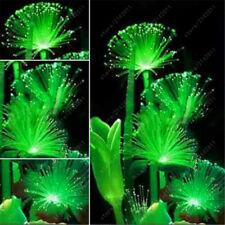 100 Pcs Rare Emerald Fluorescent Flower Seeds Night Light Emitting Plants